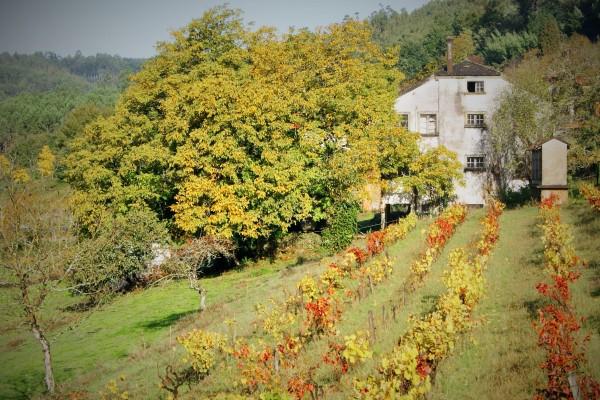 colores-de-outono-adultos-natureza-jose-manuel-perez-lopez-minA6E208D5-1FA1-7BF9-2D07-2D9664A4E510.jpg