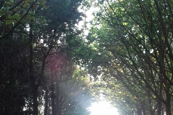 luz-de-outono-premio-xuvenil-natureza-laura-lopez-cea-min92026E41-7AA1-D4CD-4AF2-415EAC1E5CB0.jpg