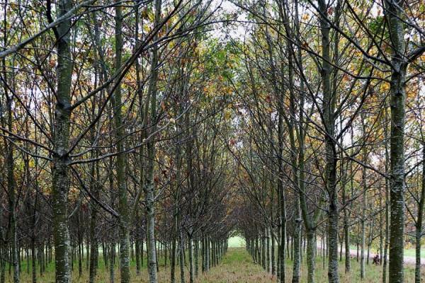 corredor-de-outono-ivan-gonzalez5F9BA6F4-B6AD-F7A6-5C1F-882E79AD51C2.jpg